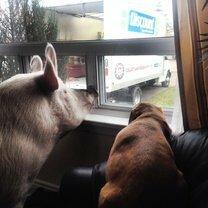 Будни домашней свиньи