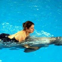 Интересно о дельфинах