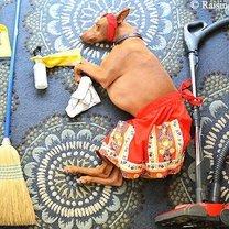 Приключения спящей собаки фото приколы