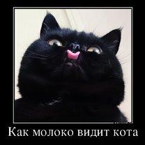 Житейские демотиваторы смешных фото приколов