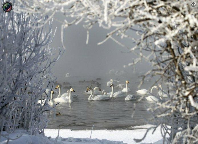 Лебединое озеро в Алтайском крае 8