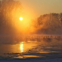 Лебединое озеро в Алтайском крае фото