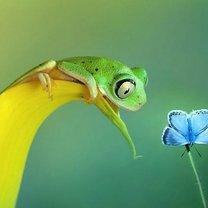 Эти прекрасные лягушки