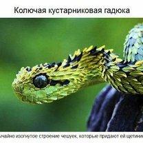 Удивительные животные