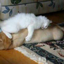 Тихо, кошки спят! смешных фото приколов