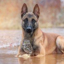 Дружба собаки и совы смешных фото приколов