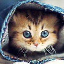 Как можно использовать кошек в повседневности смешных фото приколов