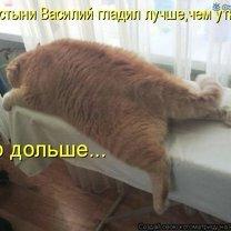 Подборка котоматрицы смешных фото приколов