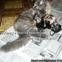 Подборка котоматрицы фото приколы