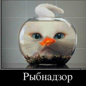 Будь реалистом! смешных фото приколов