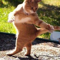Фото приколы Момент забавного движения (12 фото)