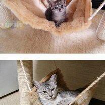 Фото приколы Котяры: тогда и сейчас (14 фото)