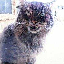 Коварные коты смешных фото приколов