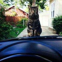 Фото приколы Коварные коты (25 фото)
