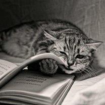 Кошки, которые всегда рядом