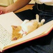 Фото приколы Кошки, которые всегда рядом (35 фото)