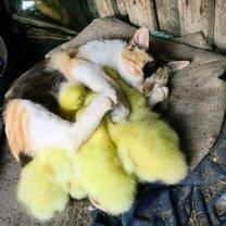 Трогательные спящие звери