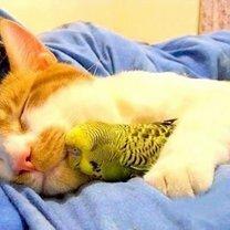 Фото приколы Трогательные спящие звери (19 фото)