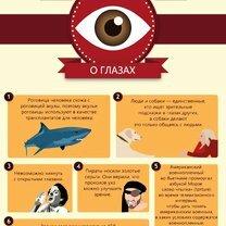 Что мы не знаем о глазах