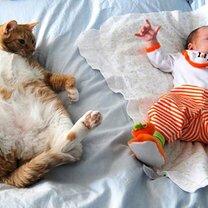 Детишки и кошаки смешных фото приколов