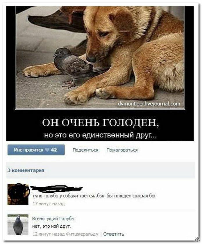 Соцсети смешные картинки