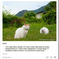 Перлы из соцсетей смешных фото приколов