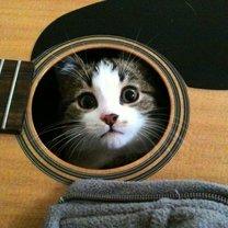 Кошки в неожиданных местах