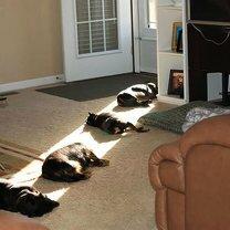 Фото приколы Братья наши меньшие спят... (14 фото)
