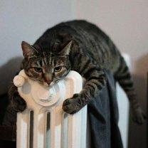Фото приколы Питомцы, которым хочется тепла (17 фото)