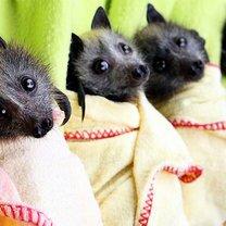 Фото приколы Дружелюбные фото летучих мышей (14 фото)