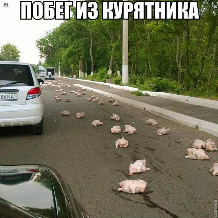Дорожные странности и комизмы 29