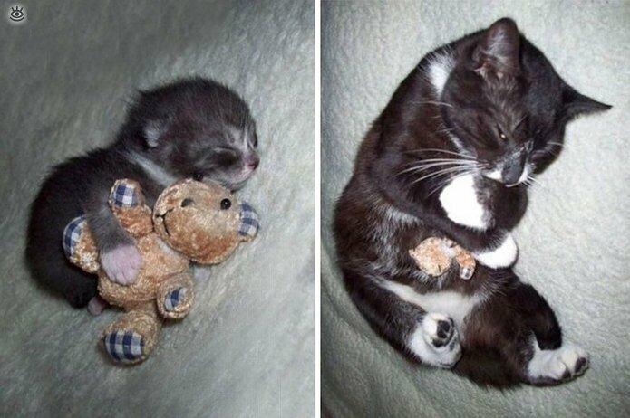 Звери с игрушками: до и после взросления 0