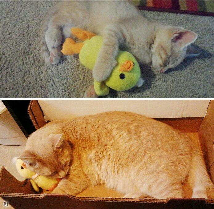 Звери с игрушками: до и после взросления 1
