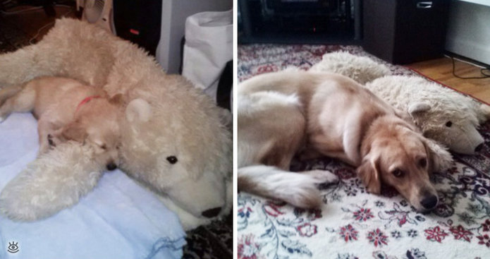 Звери с игрушками: до и после взросления 2