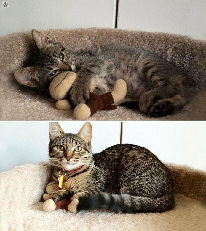 Звери с игрушками: до и после взросления 4