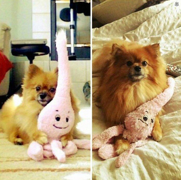 Звери с игрушками: до и после взросления 5