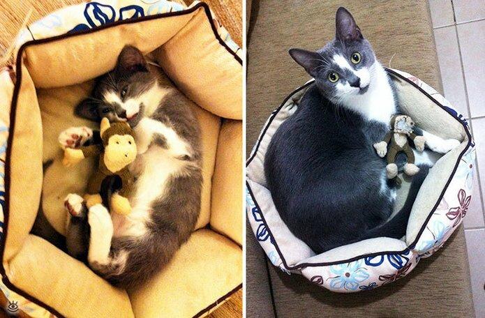 Звери с игрушками: до и после взросления 7