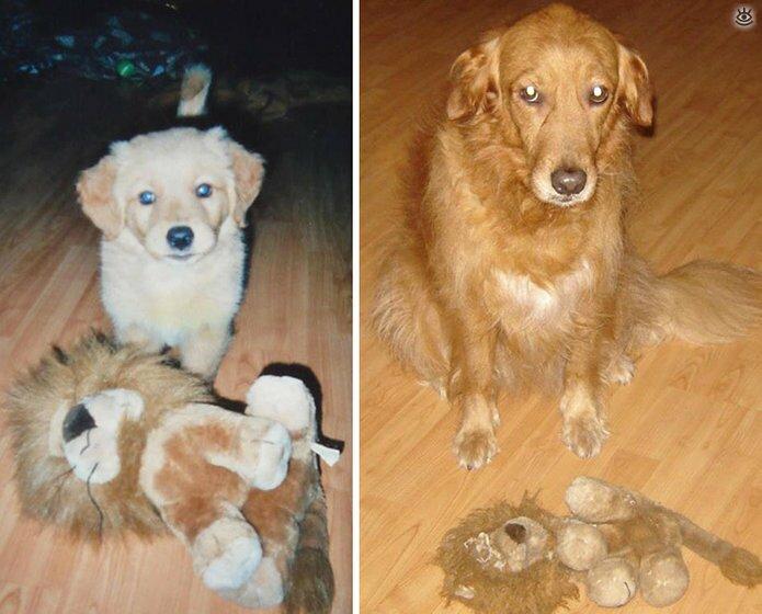 Звери с игрушками: до и после взросления 8