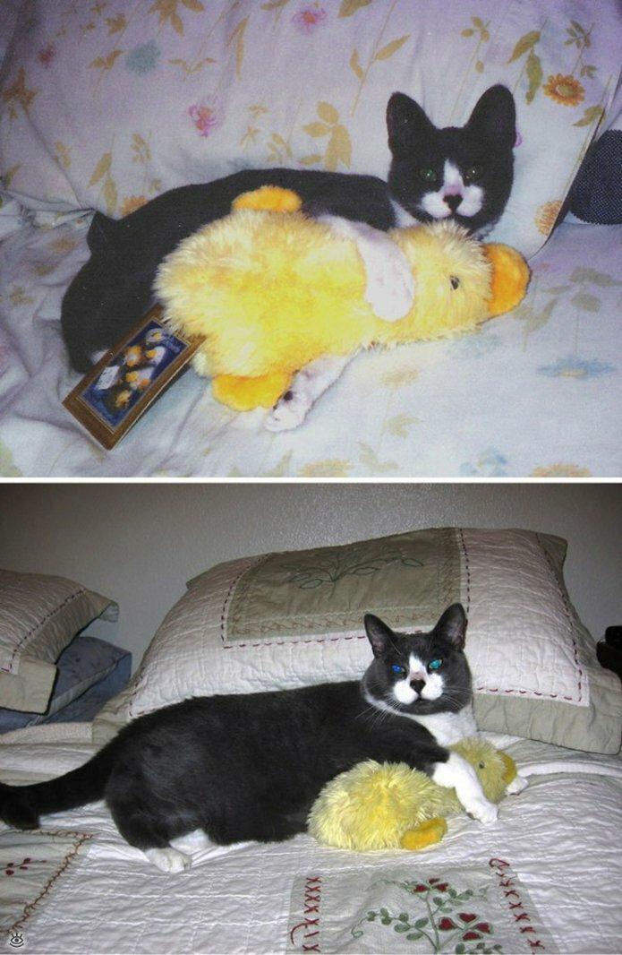 Звери с игрушками: до и после взросления 9