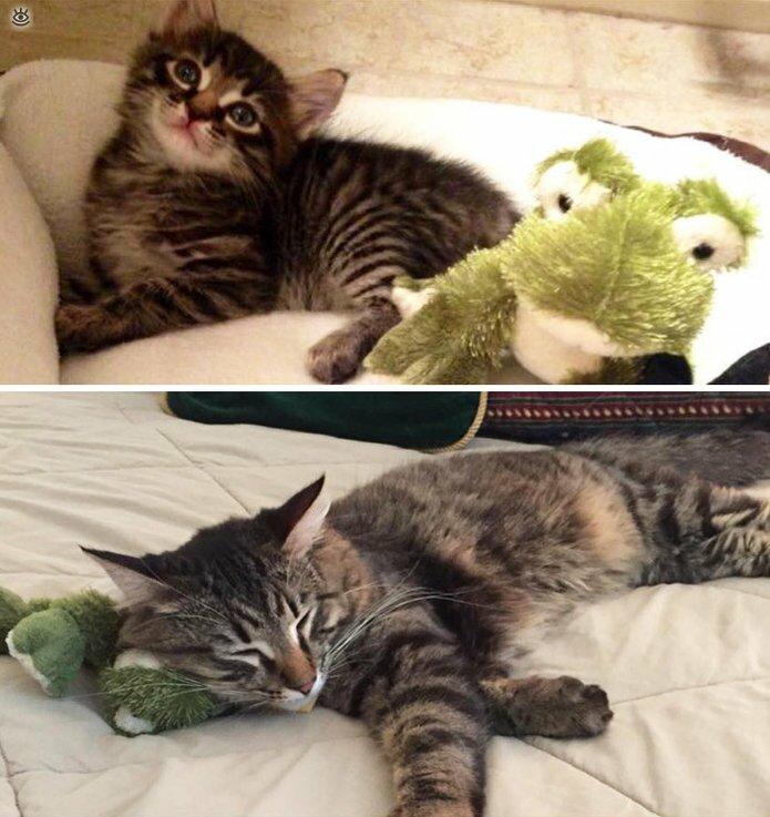 Звери с игрушками: до и после взросления 10