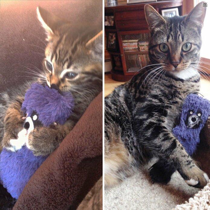 Звери с игрушками: до и после взросления 11