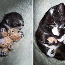 Звери с игрушками: до и после взросления смешных фото приколов