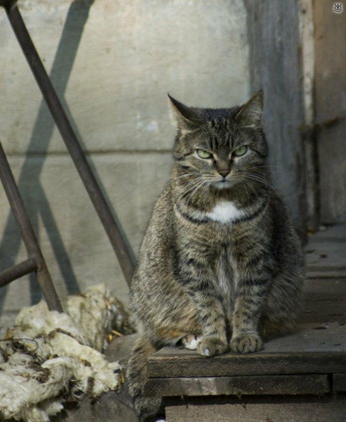Потёртые дворовые коты 5
