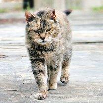 Потёртые дворовые коты