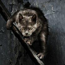 Фото приколы Потёртые дворовые коты (20 фото)