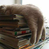 Фото приколы Котяры, которые уснули в неожиданном месте (15 фото)