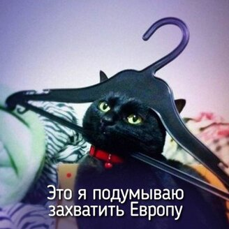 Фото приколы Звери ведут себя прямо, как я! (20 фото)