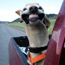 Фото приколы Собаки-адреналинщики (15 фото)