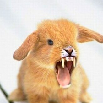 Фотошопные зверьки смешных фото приколов