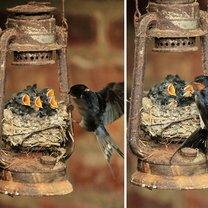 Неожиданные птичьи гнёзда